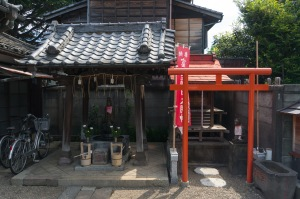 Peaceful coexistence at a temple in Nezu